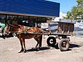 Horse wagon Copeval, SV TT, Chile - panoramio.jpg