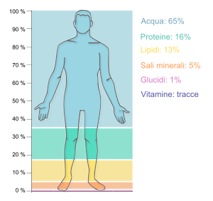 Human body external features