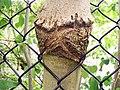 Hungry tree (4893178633).jpg