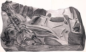Valanginian - Hylaeosaurus