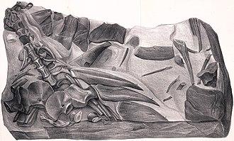 Berriasian - Hylaeosaurus