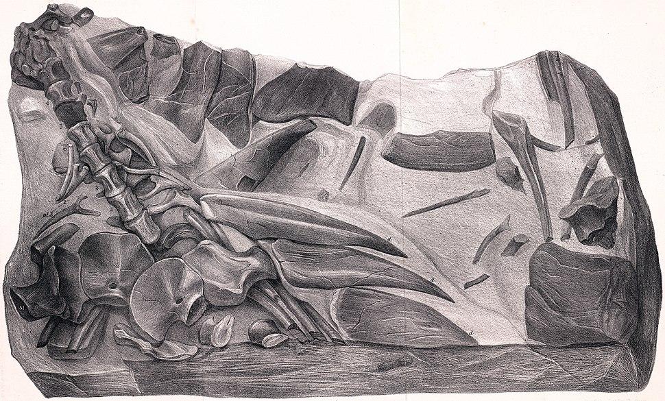 Hylaeosaurus fossil illustration