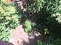 IMG 3993 - panoramio.jpg