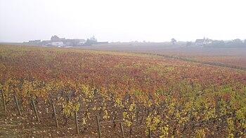 IMG Vignoble de Mercurey.JPG
