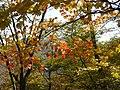 Ibarakawacho, Higashiomi, Shiga Prefecture 527-0216, Japan - panoramio (30).jpg