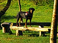 In The Morning Sun - panoramio.jpg