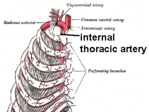 Internal mammary branch.png