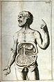 J.A. Kulmus, Tabulae anatomicae, Danzig; Wellcome L0022513EB.jpg