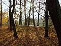 JESIENNY SPACER Kalisz park 20 - panoramio.jpg