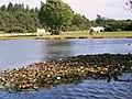 Janesmoor Pond - geograph.org.uk - 862258.jpg