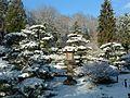 Japanese Garden (15423536944).jpg