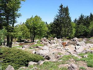 Jardin d'altitude du Haut Chitelet - Jardin d'altitude du Haut Chitelet