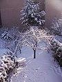 Jardin nevado 09-01-2009 - panoramio.jpg