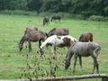 Jaroszowka konie 09270035.jpg