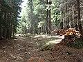 Jeep Roads on Mount Graham - panoramio.jpg