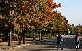 KOCIS Korea Autumn SkyPark 16 (10471408226).jpg