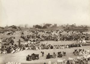 Katsina - Livestock market in Katsina, 1911