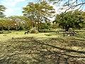 Kenya 2013. Lake Naivasha. - panoramio (11).jpg