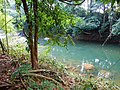 Khao Sok, 2014 December - panoramio (27).jpg