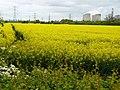 Kingston on Soar fields and Ratcliffe on Soar power station - geograph.org.uk - 1293111.jpg