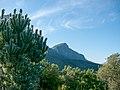 Kirstenbosch National Botanical Garden, Cape Town ( 1060044).jpg