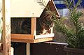 Kočka v krmítku 1.jpg