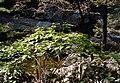 Korea-Gangwondo-Odaesan National Park 1506-07.JPG