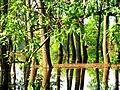 Koviljski rit - panoramio (1).jpg