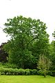 Kreis Pinneberg, Naturdenkmal 06-24 Uetersen 01.jpg