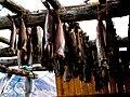 Kulusuk drying fish.jpg