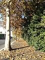 L'autunno a Roma - panoramio (1).jpg
