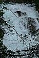 La Sorgue le 31 mai 2008 avec 1,53 mètres de hauteur, La Fontaine de Vaucluse 8.JPG