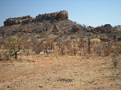 Landscape in the Mapungubwe National Park, with zebras.jpg