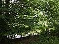 Landschaftsschutzgebiet Warmenau-Ufer LSG OS 00019 Datei 42.jpg