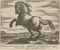 Landschap met paard uit Polen Paardenrassen (serietitel), RP-P-OB-24.401.jpg