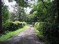 Lane - geograph.org.uk - 529209.jpg
