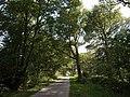 Lane to Rutleigh - geograph.org.uk - 534103.jpg