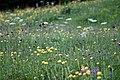 Lans-en-Vercors-4312 - Flickr - Ragnhild & Neil Crawford.jpg