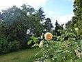 Le jardin du thabor - panoramio (7).jpg