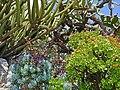 Le jardin exotique de Monaco (46899767074).jpg