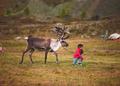 Leading Reindeer B.tif