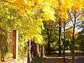 Lichterfelde - Goldener Oktober - geo.hlipp.de - 29463.jpg