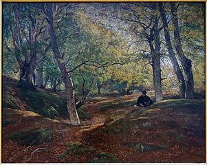 Hêtraie dans la forêt de Fontainebleau