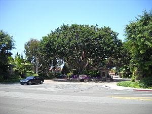 Linda Isle, Newport Beach - Linda Island, street view