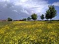Little Barugh Village Green June 2009 (Nigel Coates).jpg