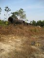 Locomotive Remains on the Pekanbaru Death Railway.jpg