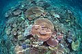 Lodestone Reef, Valentines Day 2016 CoralScape.jpg