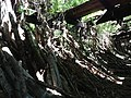 Lots of hardwood logs found inside ruins - panoramio (2).jpg