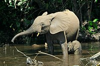An adult and a young elephant bathing in a waterhole.