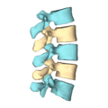 Lumbar vertebrae - close-up - lateral view2.png